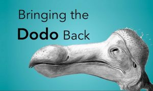Clonage dodo