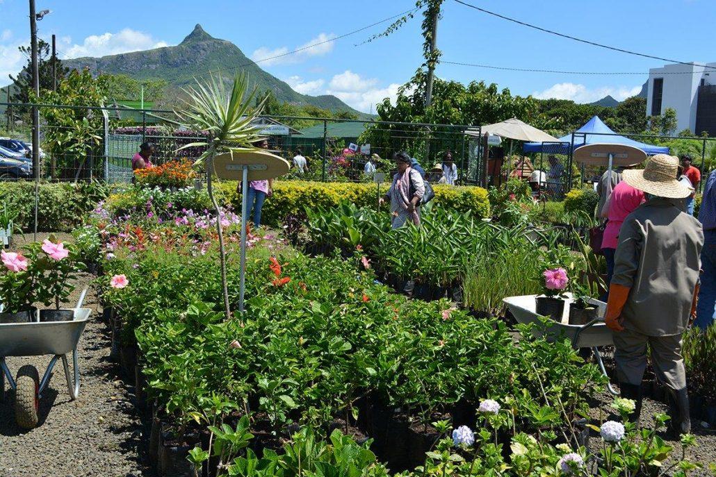 Moka Plant Festival (