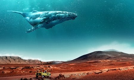 L'île de la Réunion mise sur le digital pour faire sa promotion